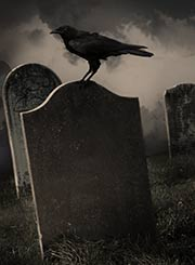 Raven in graveyard