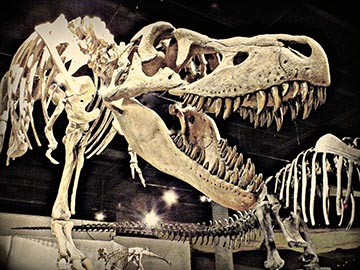 Tyrannosaurus Bataar located in Dinosaur Hall